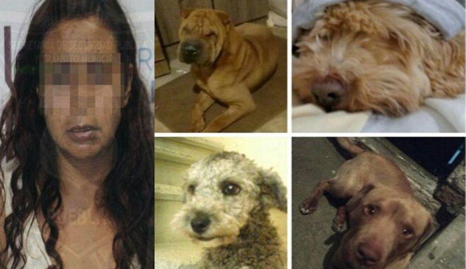 Perritos que sobrevivieron a la Come Perros de Bosques siguen sin ser adoptados