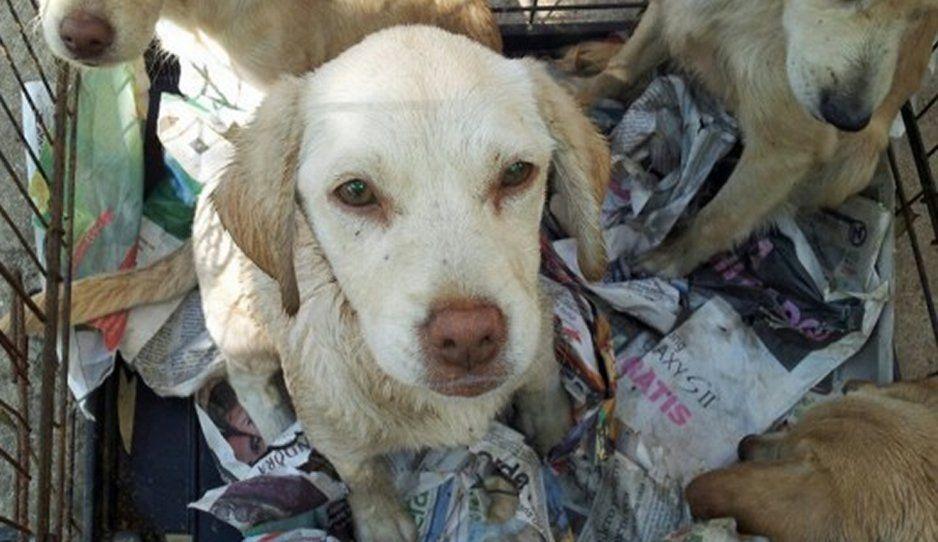 """Giran orden de aprehensión contra mujer que asesina a perritos, pero no es """"la come perros"""" de Bosques"""