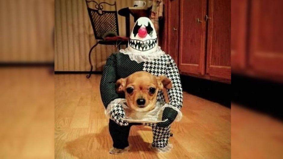 ¿No sabes de qué disfrazar a tu perrito en este Halloween? Aquí unas sugerencias (FOTOS)