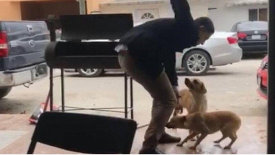 Ofrecen recompensa de 50 mil pesos para dar con sujeto que apuñaló a perro (VIDEO)