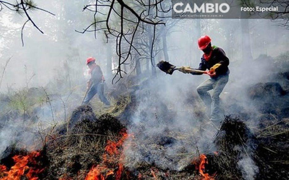 López Obrador eliminó los programas para combatir incendios forestales y es la causa de la contingencia climática