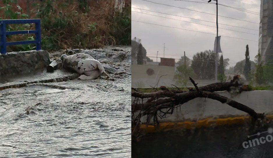 Árboles caídos, alcantarillas rotas, animales muertos e inundaciones deja tupida lluvia de viernes (FOTOS y VIDEO)