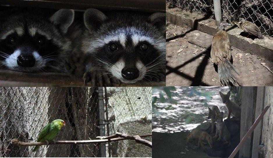 Puebla logra reproducción en cautiverio de especies en peligro de extinción