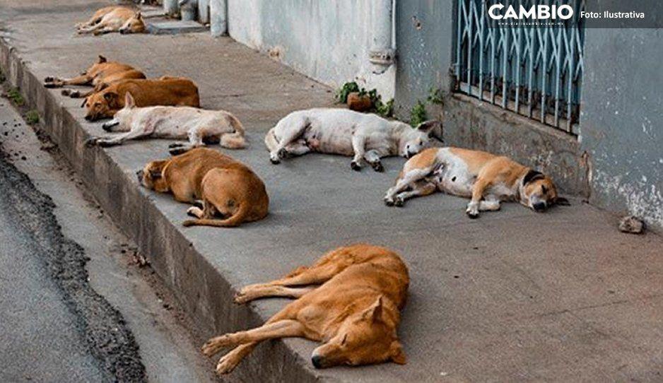 Asesinan a perritos en la Lomas de Temaxcalapa