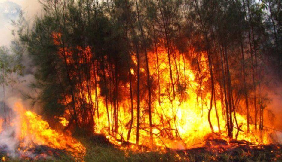 Otro incendio forestal, ahora fue en la México- Puebla, km 71