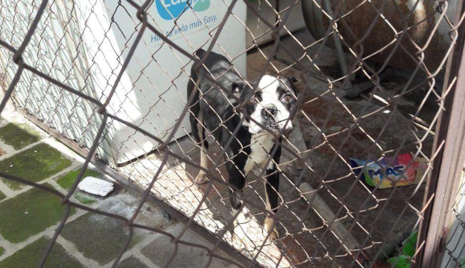 Perrito pide ayuda para que lo rescaten… está enjaulado en edificio de Bugambilias (VIDEO)