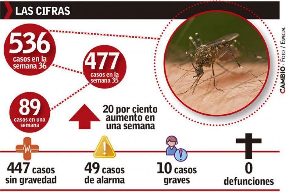 Dengue gana terreno en Puebla: suma 89 casos en la semana, van 536 en total