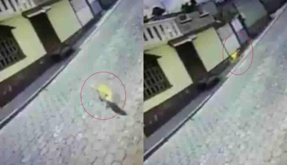 Mundo enfermo: incendian a perro en Ciudad Serdán (VIDEO)