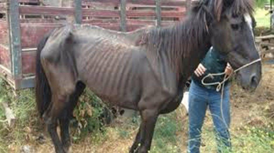 Este año habrá sanciones en Texmelucan por maltrato animal