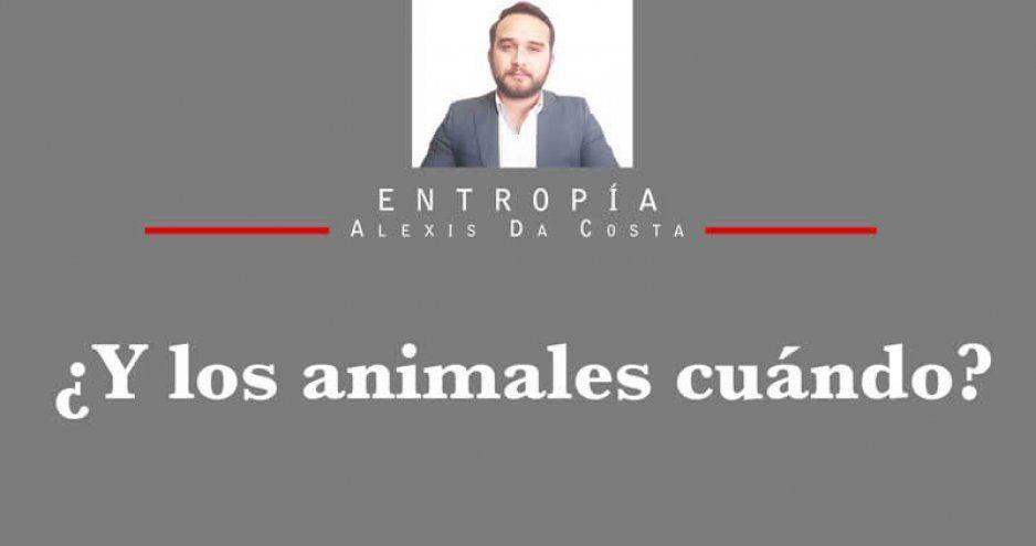 ¿Y los animales cuándo?
