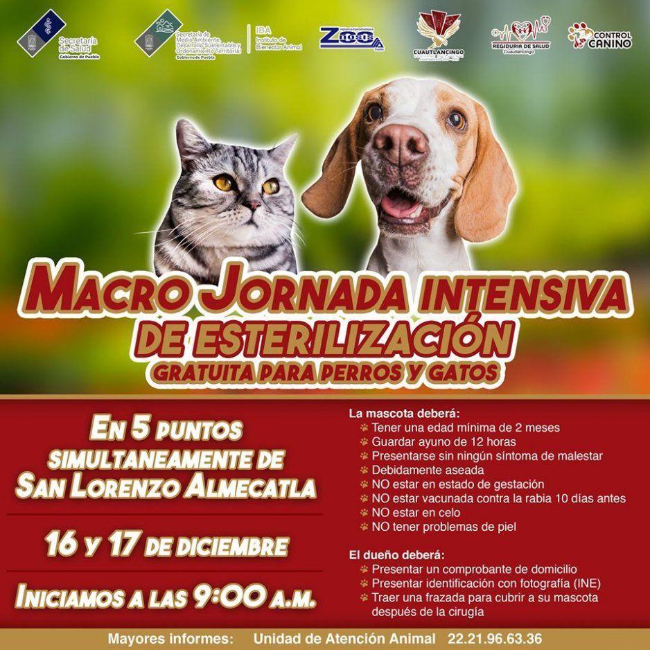 Ayuntamiento de Cuautlancingo anuncia Macrojornada intensiva de esterilización canina y felina
