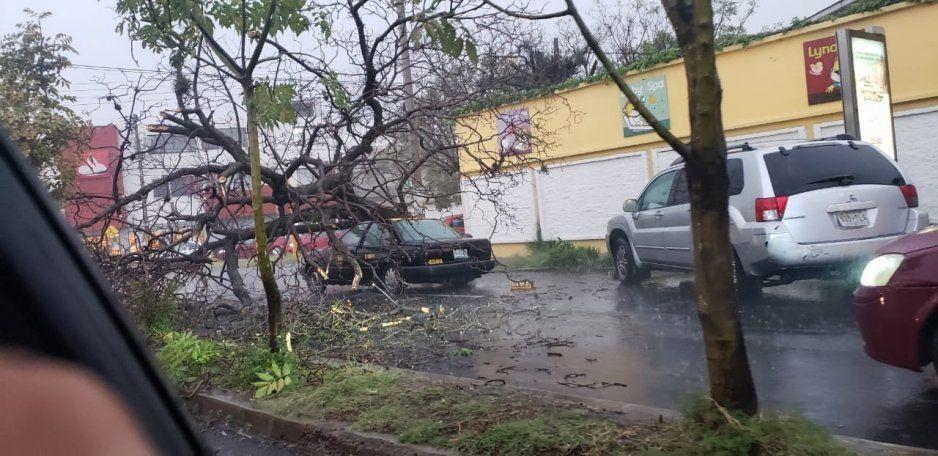 Tras fuerte lluvia cae árbol sobre taxi en El Mirador (FOTO)