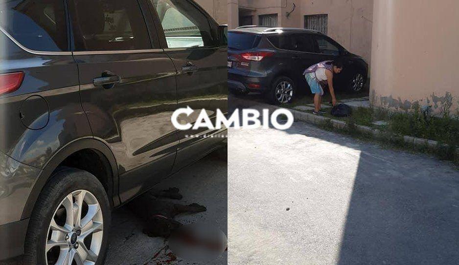 ¡Hija de pu..! #LadyMataPerros atropella cruelmente a perrito en Geo Villas San Jacinto y lo tira a la basura (FOTOS)