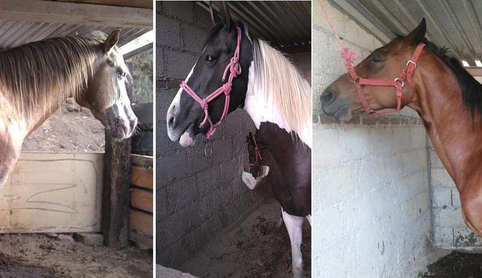 Roban violentamente caballos en las casetas de Texmelucan