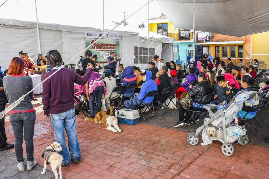 Ayuntamiento de Cuautlancingo inicia Macrojornada de esterilización canina y felina