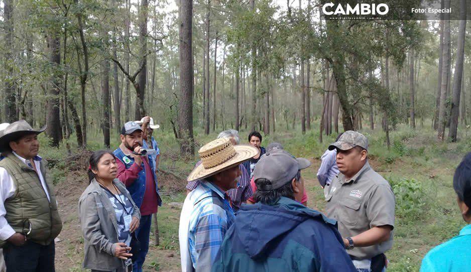 Profepa realiza recorrido por zona talada en Tlahuapan tras denuncias