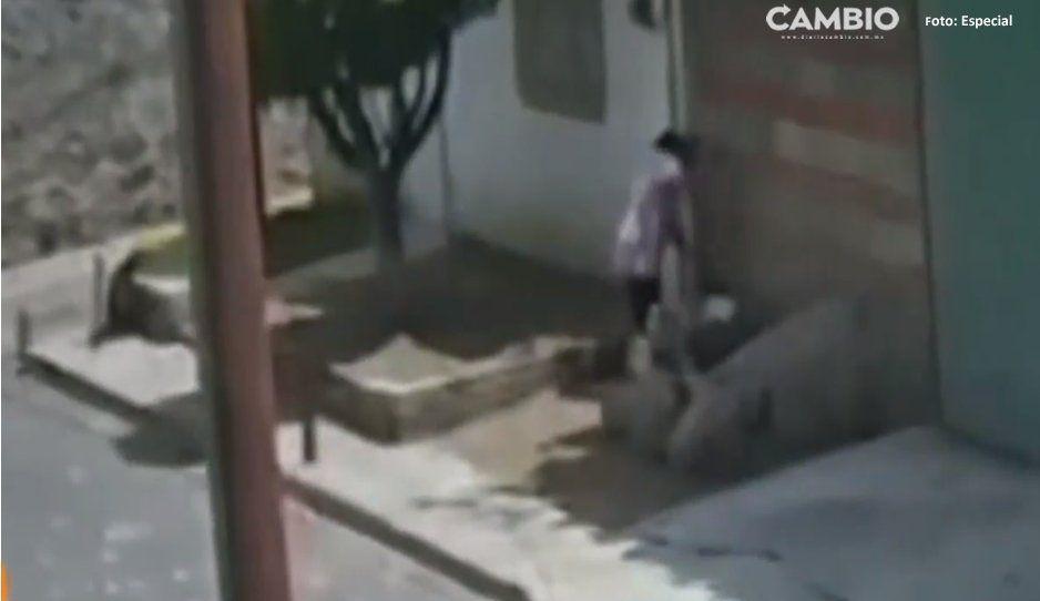 ¡Qué perra! Mujer coloca veneno en su jardinera para matar a perritos en Amozoc (VIDEO)