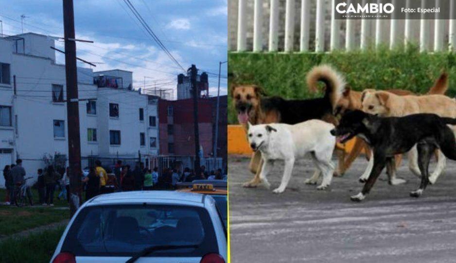 Mueren cinco de 30 perritos que tenía secuestrada la Comeperros en Bosques