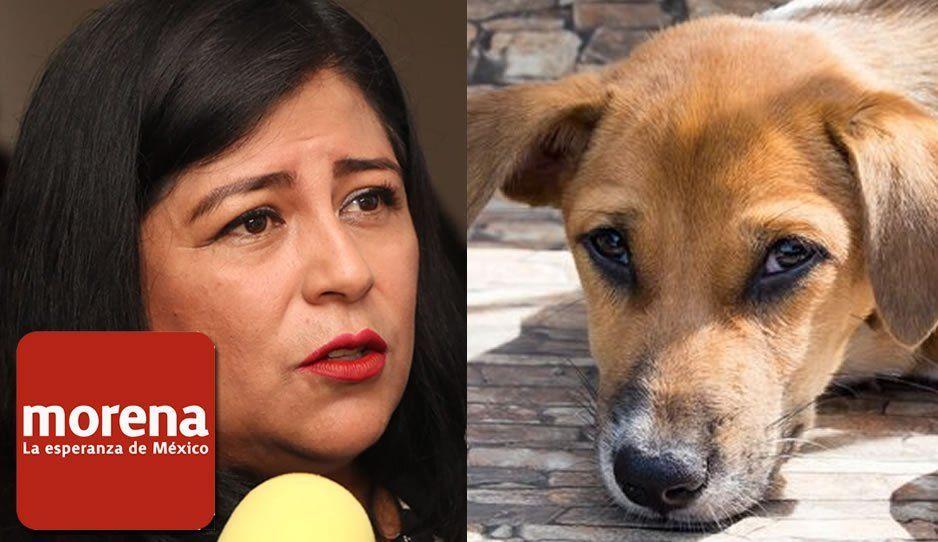 #LadyMataPerros Diputada de Morena propone exterminar perros y gatos callejeros porque estorban (VIDEO)