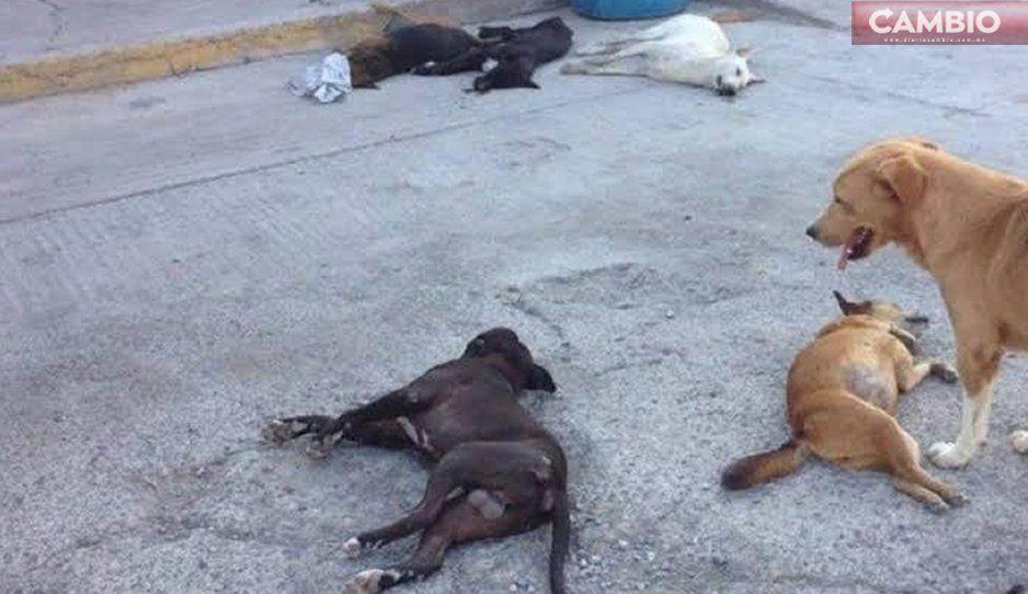 Perros callejeros atacan y lastiman a niños a adultos en Atlixco