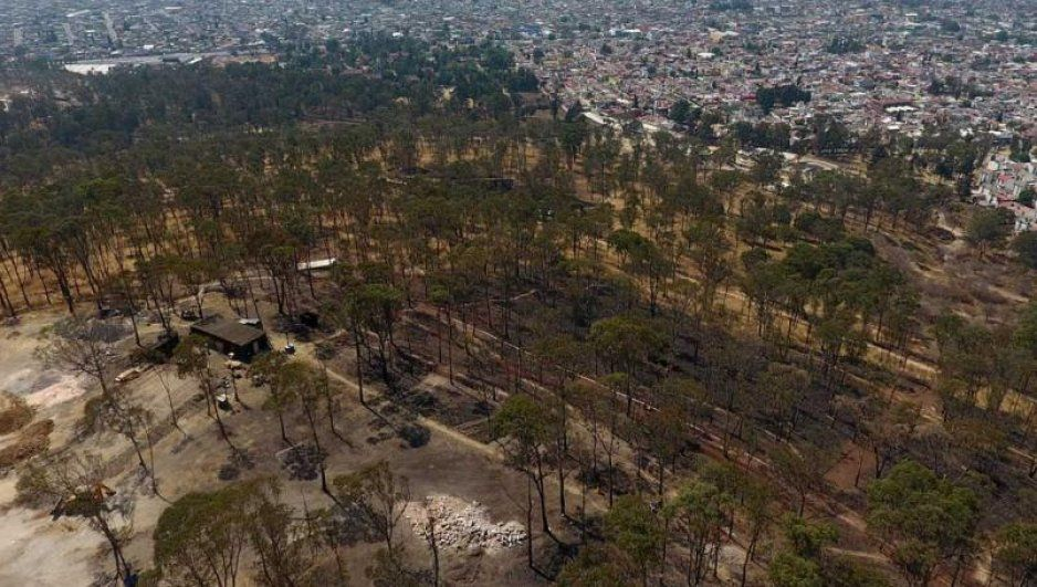 Autorizan derribar 100 árboles en Amalucan para construir otra unidad habitacional