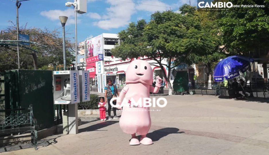 Tremendo botargón de casi dos metros causa sensación en Tehuacán (VIDEO)
