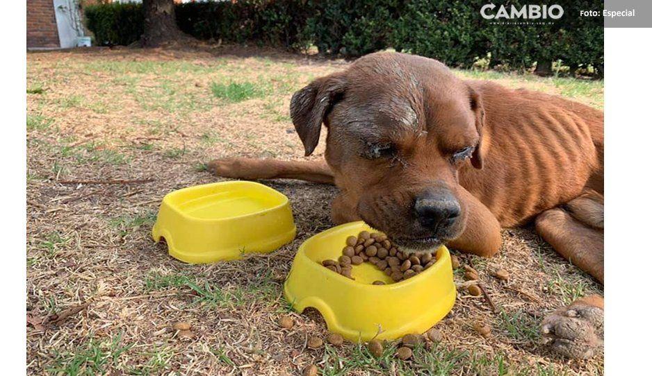 Rescate increíble de Costalito, un perrito ciego que cayó en un pozo cerca del Aeropuerto de Puebla (VIDEOS)