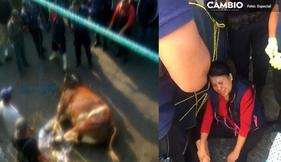 Pánico y correteada en Atlixco: Toro se escapa del rastro municipal y deja a tres lesionados