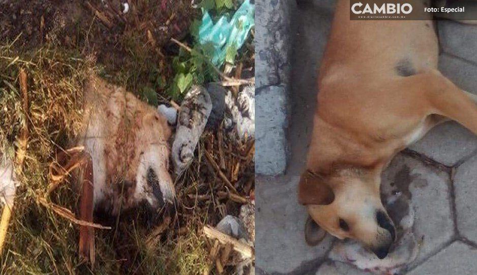 ¡Mundo enfermo y cruel! Envenenan a 12 perritos en Libres