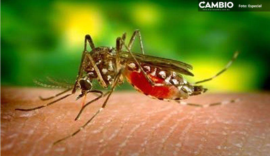 Dengue se sigue propagando en Puebla: 144 nuevos casos en una semana y tres defunciones