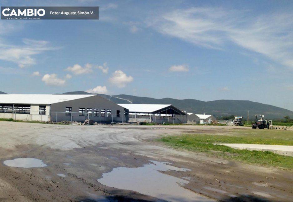 Construcción de granjas en Tochtepec provoca daños a viviendas: empresa Avigrupo se niega a responder