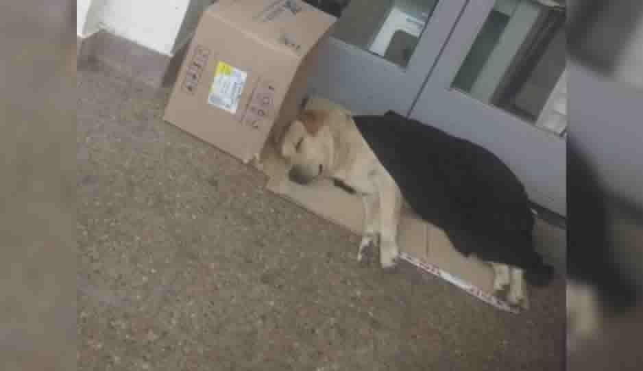 Conoce la historia de Toto, un perrito que espera a su dueño fallecido en la puerta del hospital