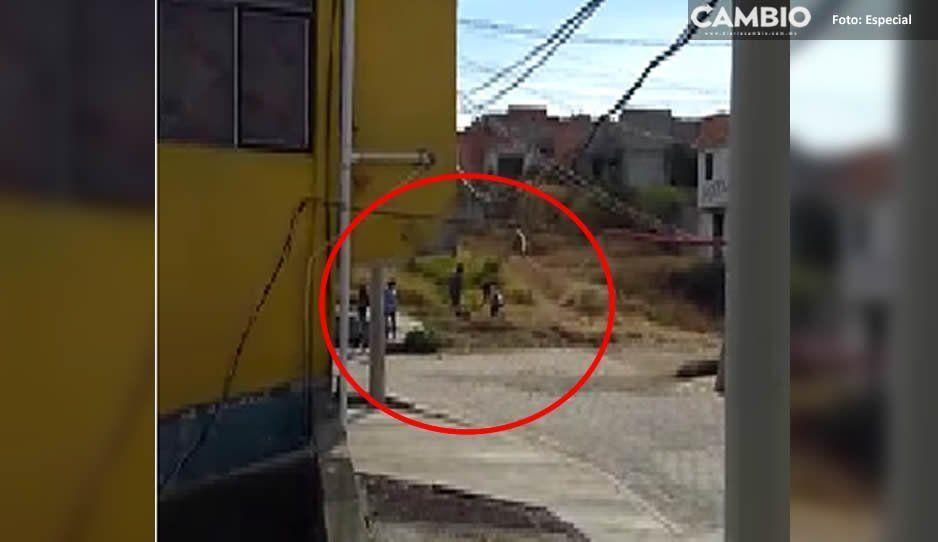 Otro caso de crueldad: matan a machetazos a perrito en Atlixco porque se metió a su casa y mordió a sus mascotas (VIDEO)