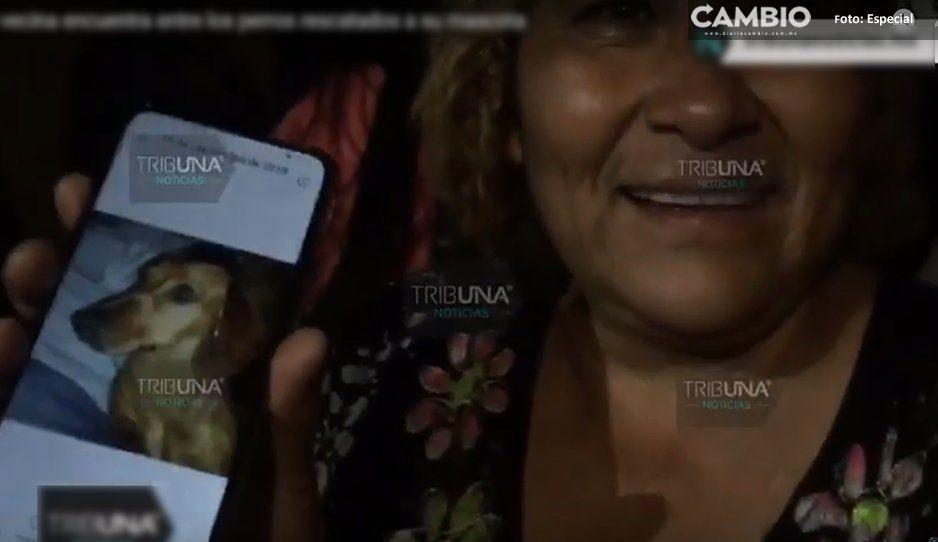 Vecina llora de felicidad al encontrar a su perrito; la Comeperros de Bosques de San Sebastián no lo hizo carne enchilada (VIDEO)