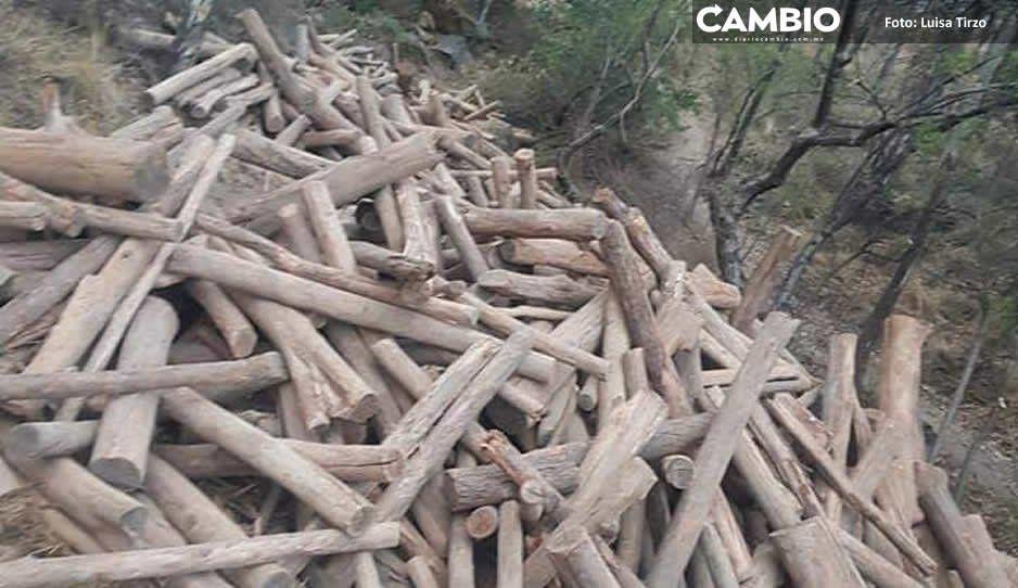 Edil Arriaga Lila, cómplice de exterminio del cerro Zapotecas en San Pedro Cholula