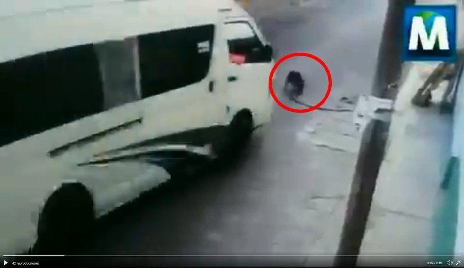 Cafre de la Ruta San Francisco a toda velocidad atropella a perrito pitbull (VIDEO)