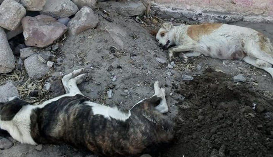 Desalmados envenenan a perritos en Oriental (CRUEL VIDEO)