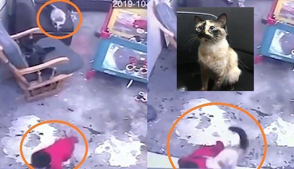 ¡Héroe sin capa! Gatita salva a bebé de caer por las escaleras (VIDEO)