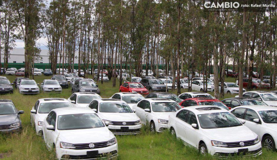 Volkswagen no extrañará al Beetle, asegura estabilidad en 2020 con Jetta, Tiguan y Golf