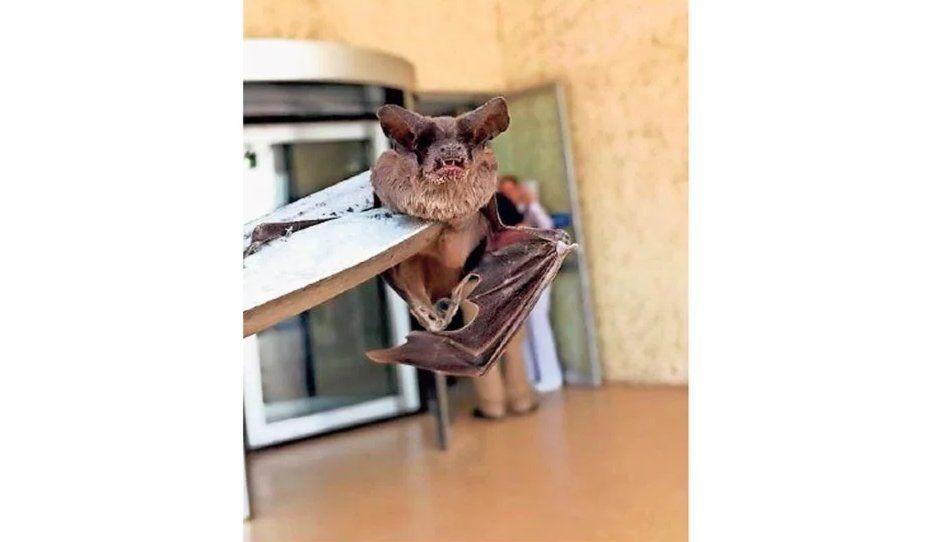¡Lo que faltaba! Murciélagos llegan a IMSS
