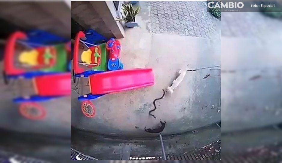 Dos perritas evitaron que una cobra atacara a una bebé, una de ellas murió por defenderla