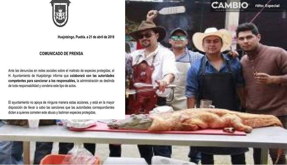Ayuntamiento de Huejotzingo reprueba festín de cocodrilo