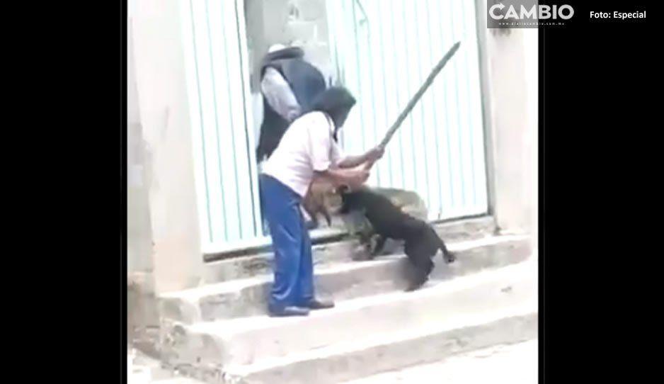 #CasosDeCrueldadPuebla: Señora mata a perritos y los hace barbacoa