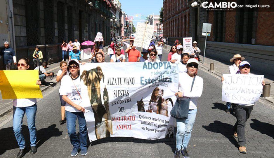 Fracasa marcha vs la comeperros: solo 25 personas se reúnen para exigir que la encarcelen