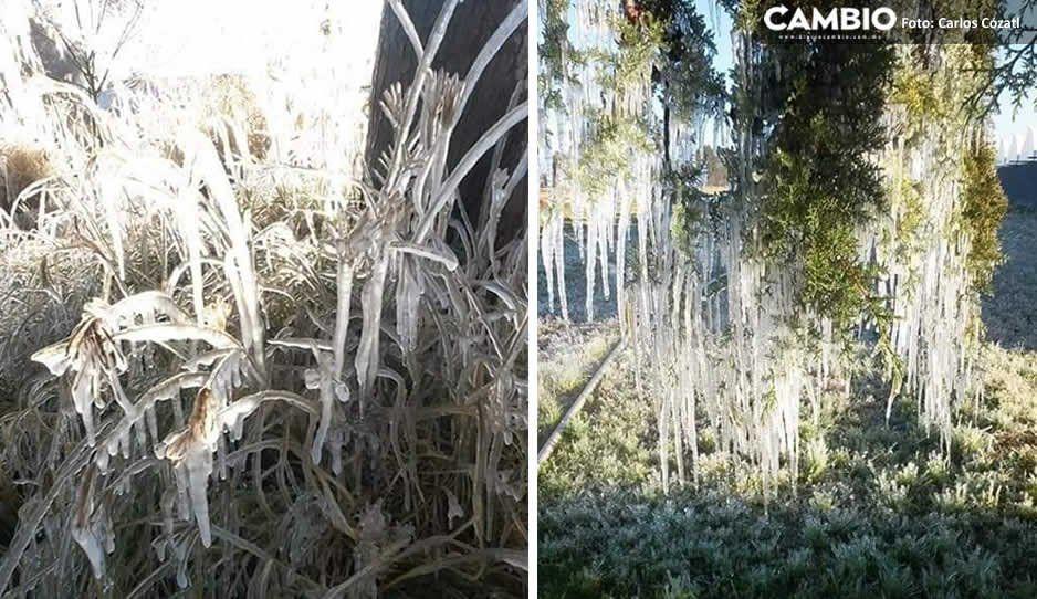 Bajas temperaturas congelan Tochtepec (FOTOS)