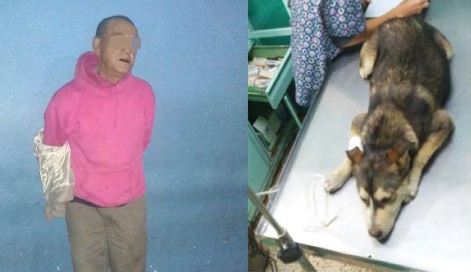 Zoofílico viola y destroza a perrita, la mandó al veterinario (FOTOS y VIDEO)