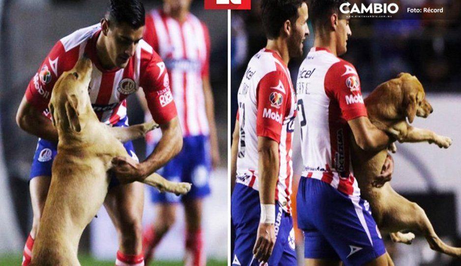 VIDEO: Perrito invade partido del San Luis vs Cruz Azul y causa ternurita en redes
