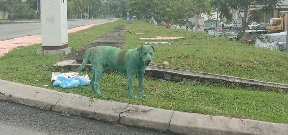 ¡Qué poca Marvel! Encuentran a perrito pintado de Hulk y lo ponen en adopción (FOTOS)