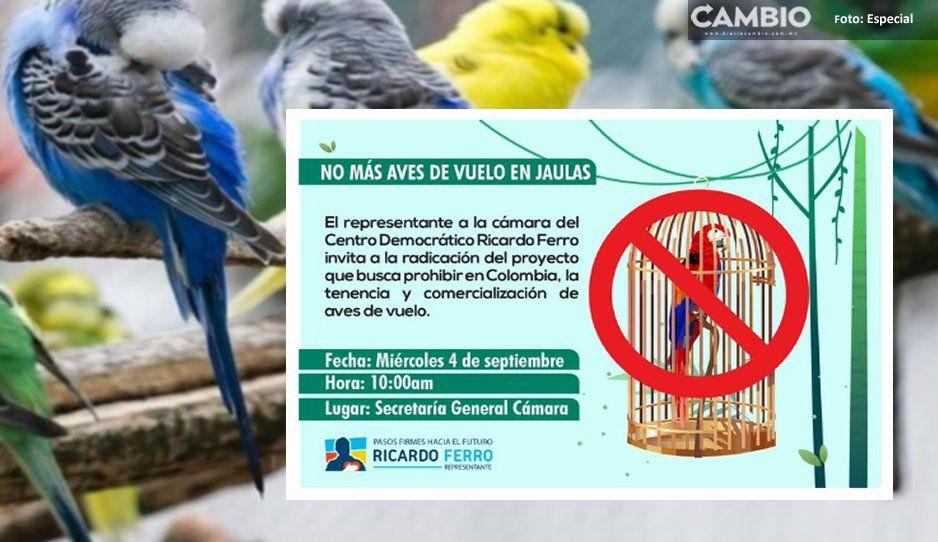 OMG! La nueva ley de protección animal prohíbe tener pajaritos en casa
