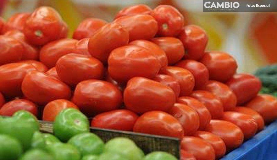 Productores de jitomate de Tehuacán piden intervención del estado para regular precios